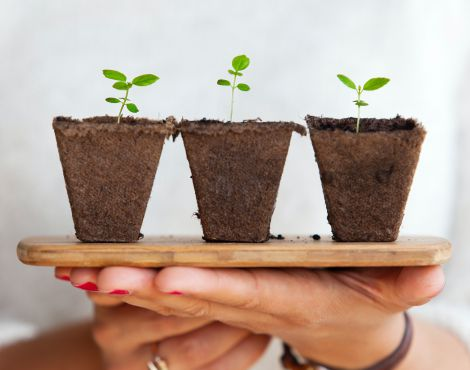 Quem tem regado a sua semente?
