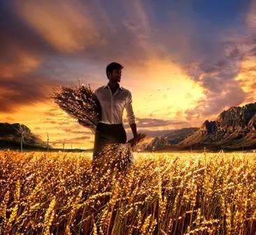 Deus só te dá uma nova colheita quando você maximiza a que já tem!