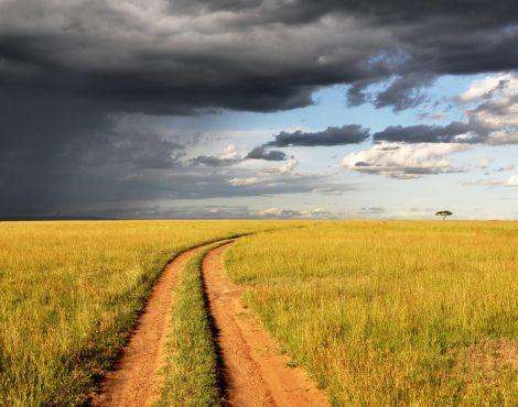 Qual caminho você quer seguir?
