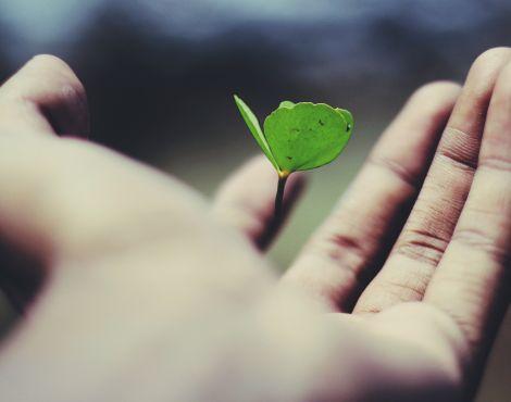 Por que a autossuficiência o impede de crescer?