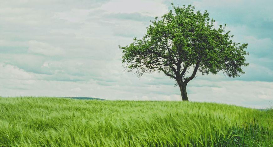 Seja uma figueira frutífera onde você estiver, faça a diferença